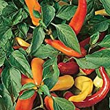 Chilli pepper - Hungarian Hot wax - 15 seeds