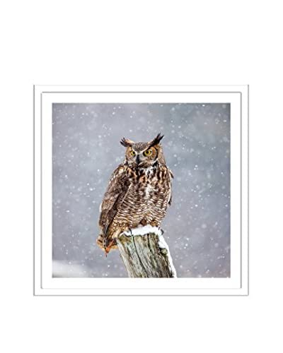Getty Images Great Horned Owl