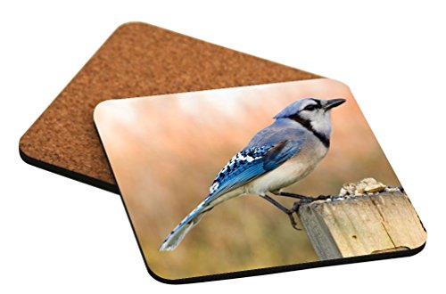 Rikki Knight Blue Jay Bird On Tree Trunk Design - Cork Backed Hard Square Beer Coasters x2 (Ideal gift for all Occassions)