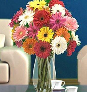Send Fresh Cut Flowers - 70 Assorted Gerber Daisies