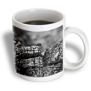 Jos Fauxtographee Realistic - A Tree Trunk In Black And White In The Pine Valley Canyon Of Utah Shot Close Up - 11Oz Mug (Mug_53478_1)