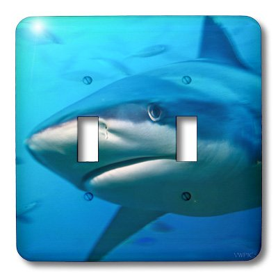 3dRose lsp_45865_2 Double Toggle Switch with Bull Shark Close-up (Shark Light Switch compare prices)