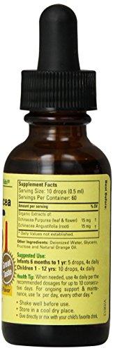 增强抵抗力,预防伤风感冒,ChildLife Essentials Echinacea 儿童紫锥菊滴剂图片