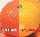 JA香川県 「小原紅早生・金時紅」2.5kg【お歳暮にも】