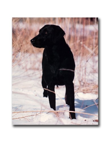 Black Lab Dog Hunting In Snow Outdoor Wall Picture 8x10 Art Print