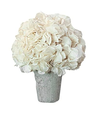 Napa Home & Garden Hydrangea in Pot, White