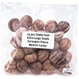 Escargot Shells, Large Empty - 24 pcs