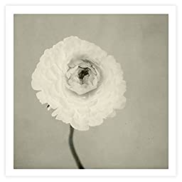 Art Wall \'Ranunculus Flower\' Unwrapped Canvas by Elena Ray, 40 by 40-Inch