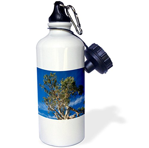 danita-delimont-australia-australia-springton-the-herbig-tree-first-home-of-friedrich-herbig-21-oz-s