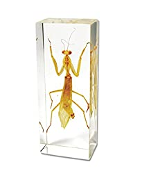 Praying Mantis Paperweight (4.25\