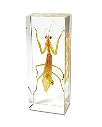 Praying Mantis Paperweight (4.25\