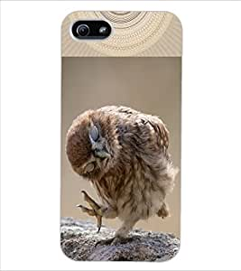ColourCraft Cute Owl Design Back Case Cover for APPLE IPHONE 5