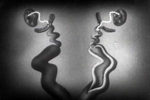 Vintage Life Science Movie with Vivisection: In the Beginning DVD (1935)