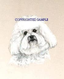 Bichon Frise - Portrait by Cindy Farmer