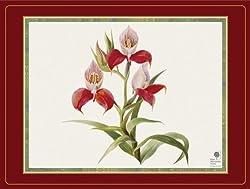 Pimpernel Botanical Orchid Placemats - Set of 4 (Large)
