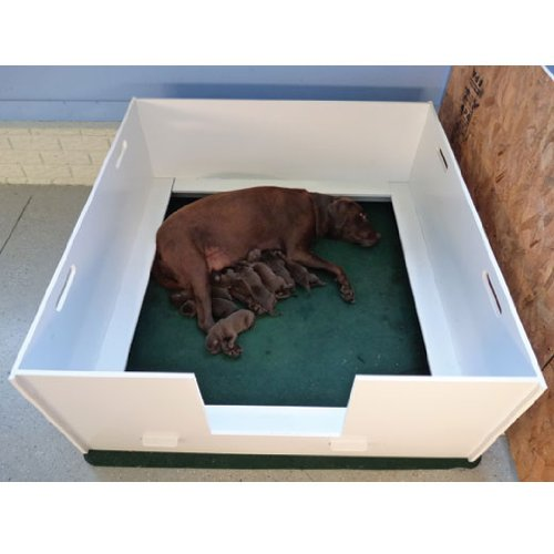 Plaza MagnaBox Whelping Box, Large