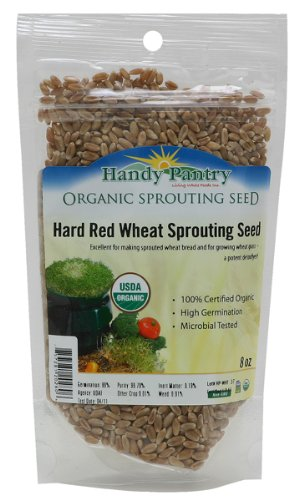 Organic Hard Red Wheat Seed 1/2 Pound (8 Oz.) 