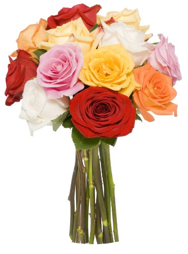 Benchmark Bouquets Dozen Rainbow Roses, No Vase
