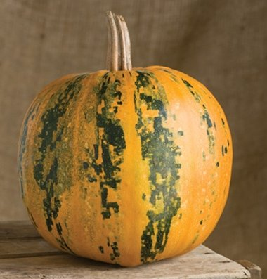 how to make david pumpkin seeds