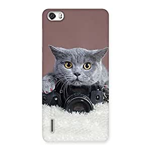 Cute Kitty Photograph Back Case Cover for Honor 6