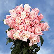 Light Pink Flower Roses 50 Light Pink…