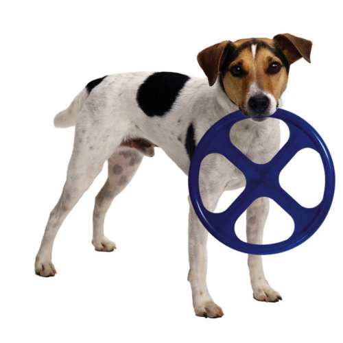 Yard Toys For Dogs : Best outdoor dog toys for dogs alone outside