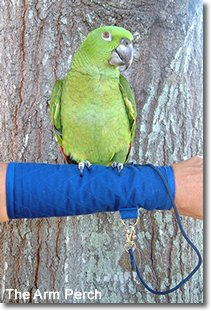 Image of Parrot Arm Perch - Size: Large (B003F615J6)