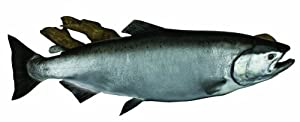 HQ Taxidermy SKG42.5-DW 42.5-Inch King Salmon Replica Wall Mount with Driftwood by HQ Taxidermy