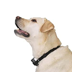 citronellar anti barking collar how to use
