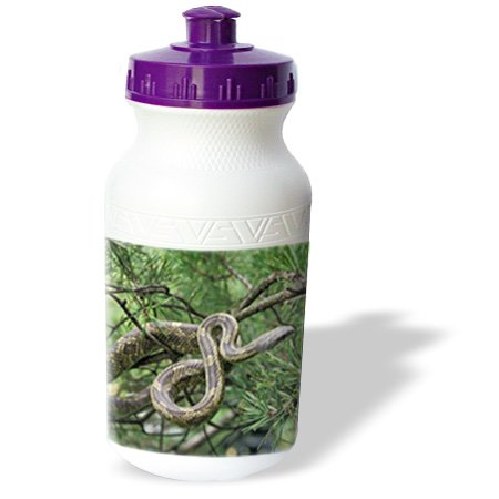 Wb_83594_1 Danita Delimont - Snakes - Black Rat Snake Climbing Into Pine Tree - Na02 Aje0284 - Adam Jones - Water Bottles front-383194