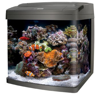 Best fish tank aquariums for home 2015 for 29 gallon fish tank dimensions