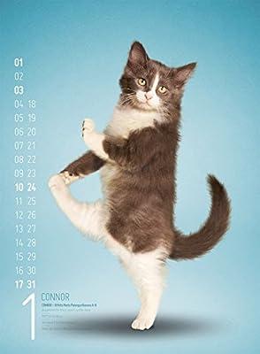 Yoga Cats 2016