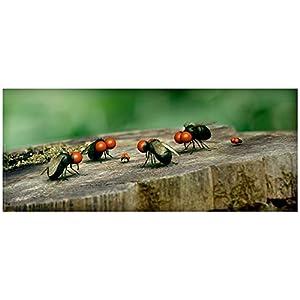 Minuscule, la vallée des fourmis perdues [Combo Blu-ray + DVD]
