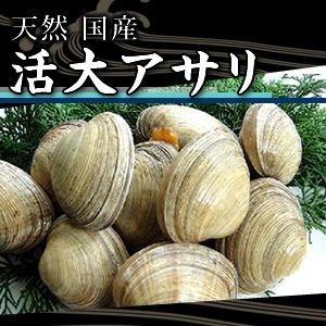 活大アサリ 1kg(6個?8個)