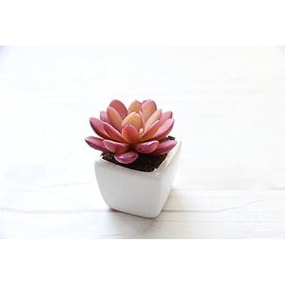 Artificial Succulent Plant Small Glass Cube Artificial Plant Faux Succulent Planter Pots The Best Gift Garden/ Modern Home Decor/Office