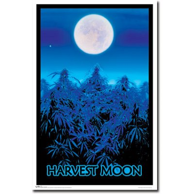 Harvest Moon Marijuana Pot Plants Flocked Blacklight Poster Print - 22x34 Blacklight Poster Print, 22x34