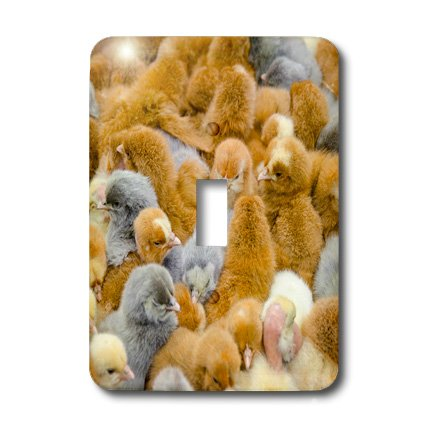 Picture Of Baby Chicks front-1047313