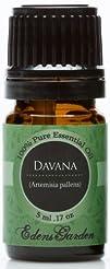 Davana 100 Pure Therapeutic Grade Essential Oil- 5 ml