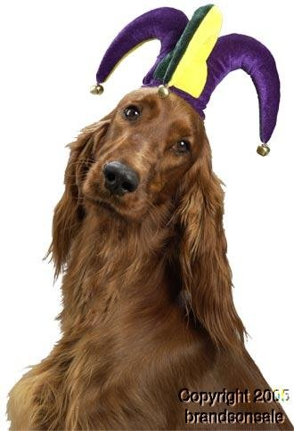Pet Jester Dog Costume Hat For Small Dogs