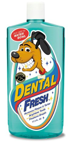 Synergy Dental Fresh Dog, 17 Ounce