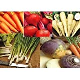 5 Packs - VEGETABLE SEEDS - onion, swede, parsnip, beet and carrot