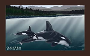 Northwest Art Mall MR-3067 Glacier Bay National Park Orca Pod 11 by 17-Inch Print by Mike Rangner