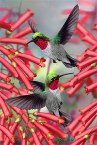 Artgame - Hummingbirds - 3D Mini Puzzles