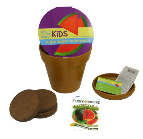 Green Arbor 8990 Pick of the Arbor Kids Sugar Baby Watermelon