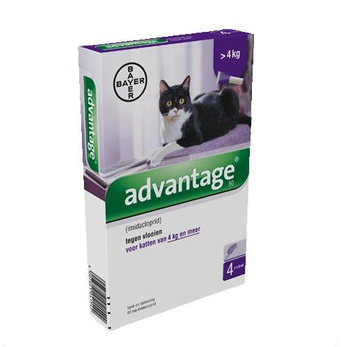 Advantage-80-Katze-4-Pipetten