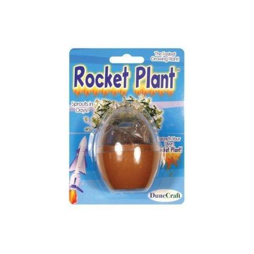 DuneCraft MT-R145 Super Fast Rocket Plant Micro Terrarium - 1