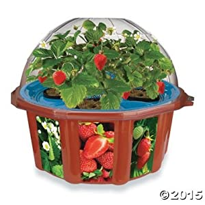 Hydro-Dome Strawberry Planter