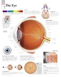 The Eye chart: Wall Chart
