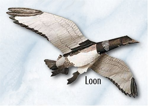 Jackite Loon - Assembled