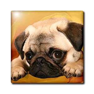 ct_3644_1 Dogs Pug - Pug - Tiles - 4 Inch Ceramic Tile
